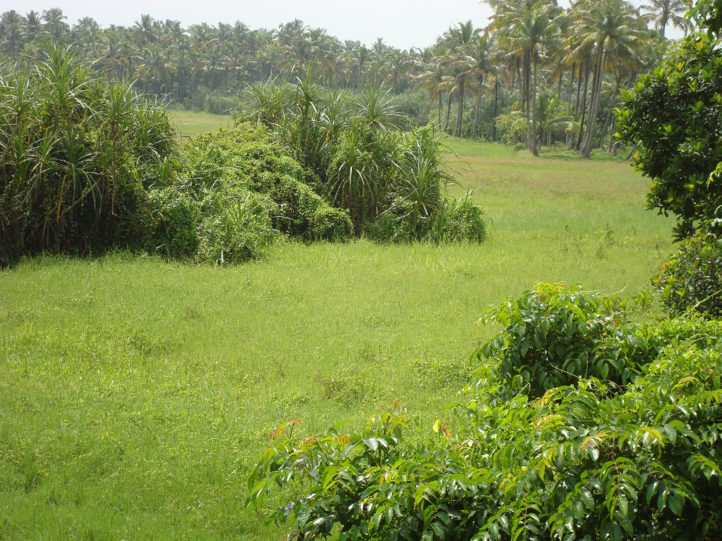 Chalakudy river take diversion to east where Oxbow lake has been formed