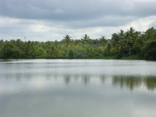 Agency for Development of Aquaculture, Kerala - ADAK Fish Farm Poyya, Mala, Kerala, established in 1989 with the help of UNDP.